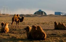 Оюутолгой ордын ашиглалтад Монгол Улсын эрх ашгийг хангуулна