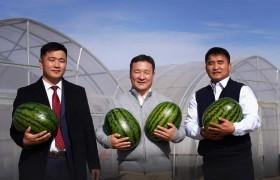 Монгол хөрсөнд, олон улсын стандартын дагуу тарьж ургуулсан амтат тарвас иргэдийн гарт хүрч эхэллээ