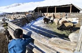 Говь-Алтай аймагт өвс тэжээлийн нөөц бүрдүүлэхэд 250 сая төгрөгийн санхүүжилт олгоно