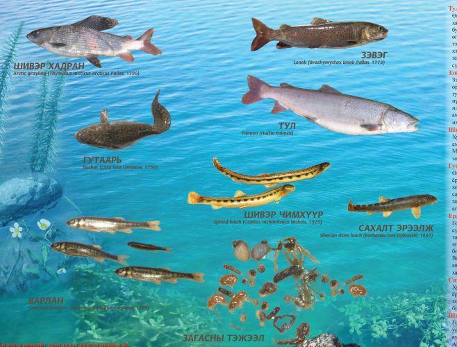 Ирэх сарын нэгнээс загас барихыг хориглоно