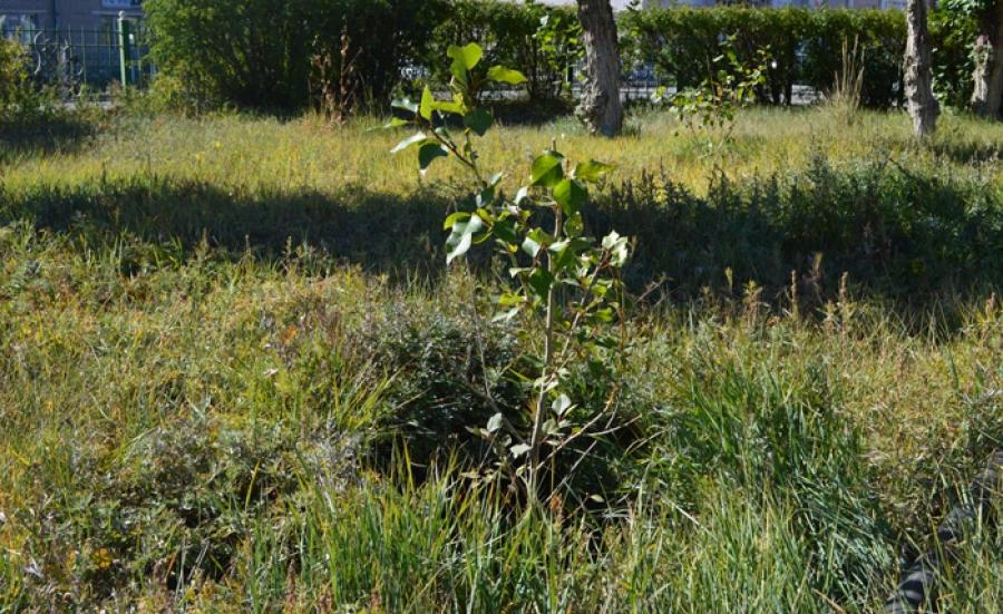 Найман сая гаруй тарьц суулгасны 70 орчим хувь нь ургаж байна
