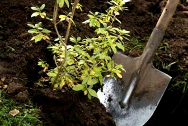 """Ногоон хатагтай Б.Саранчимэг мод тарих """"Challenge""""-ыг эхлүүллээ"""