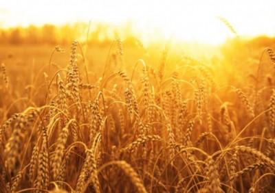 Ургац хураалтын мэдээ гарчээ