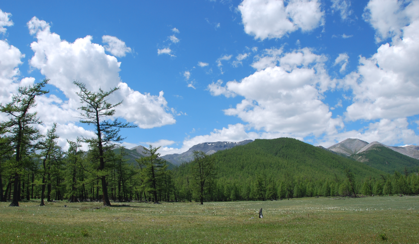 Байгаль хамгаалах нөхөрлөлүүд 3 сая га ойн санг гэрээгээр эзэмшиж байна