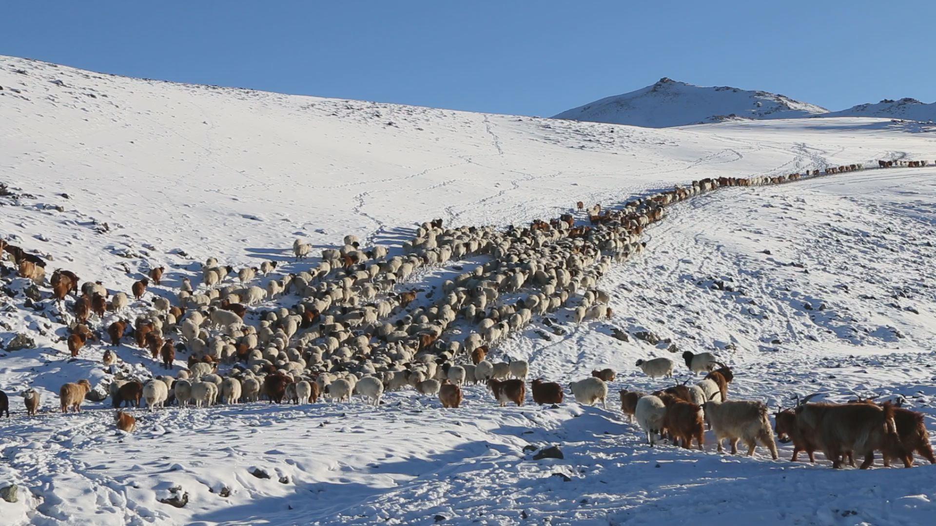 Хөвсгөл аймгийн зарим суманд 100 тн өвс тэжээл хүргэнэ