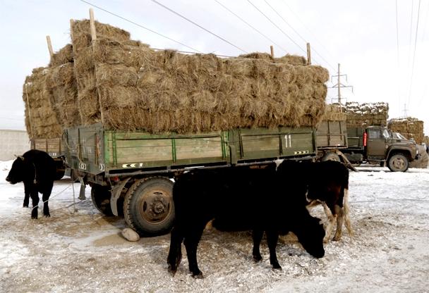 ОХУ-аас  оруулж ирэх өвс, тэжээлийг НӨАТ, гаалийн татвараас чөлөөлнө