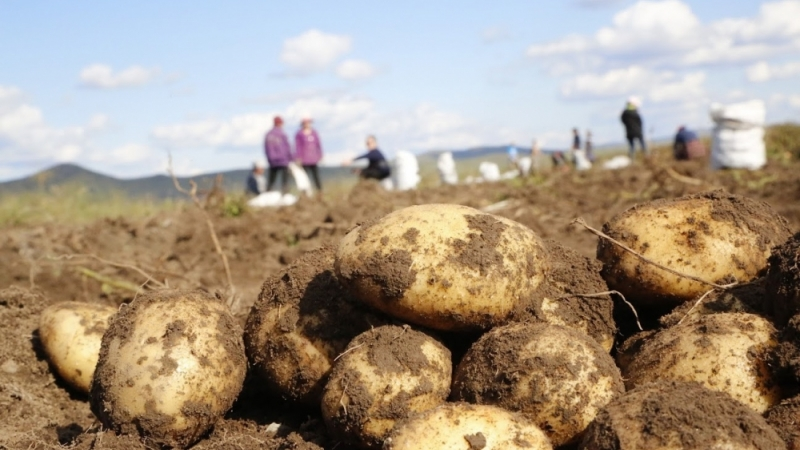 Улаанбуудай болон төмсний хэрэгцээг 100 хувь дотоодоосоо хангах зорилтыг гишүүд сайшаалаа