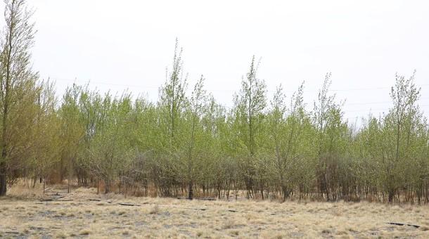 Ногоон хэрэм төслийн хүрээнд ойжуулсан талбайг Өмнөговь аймгийн сум дундын ойн ангид хүлээлгэн өглөө