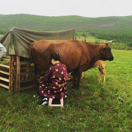 Улсын аварга малчин өрх, фермер, саальчин шалгаруулах журмыг шинэчлэв