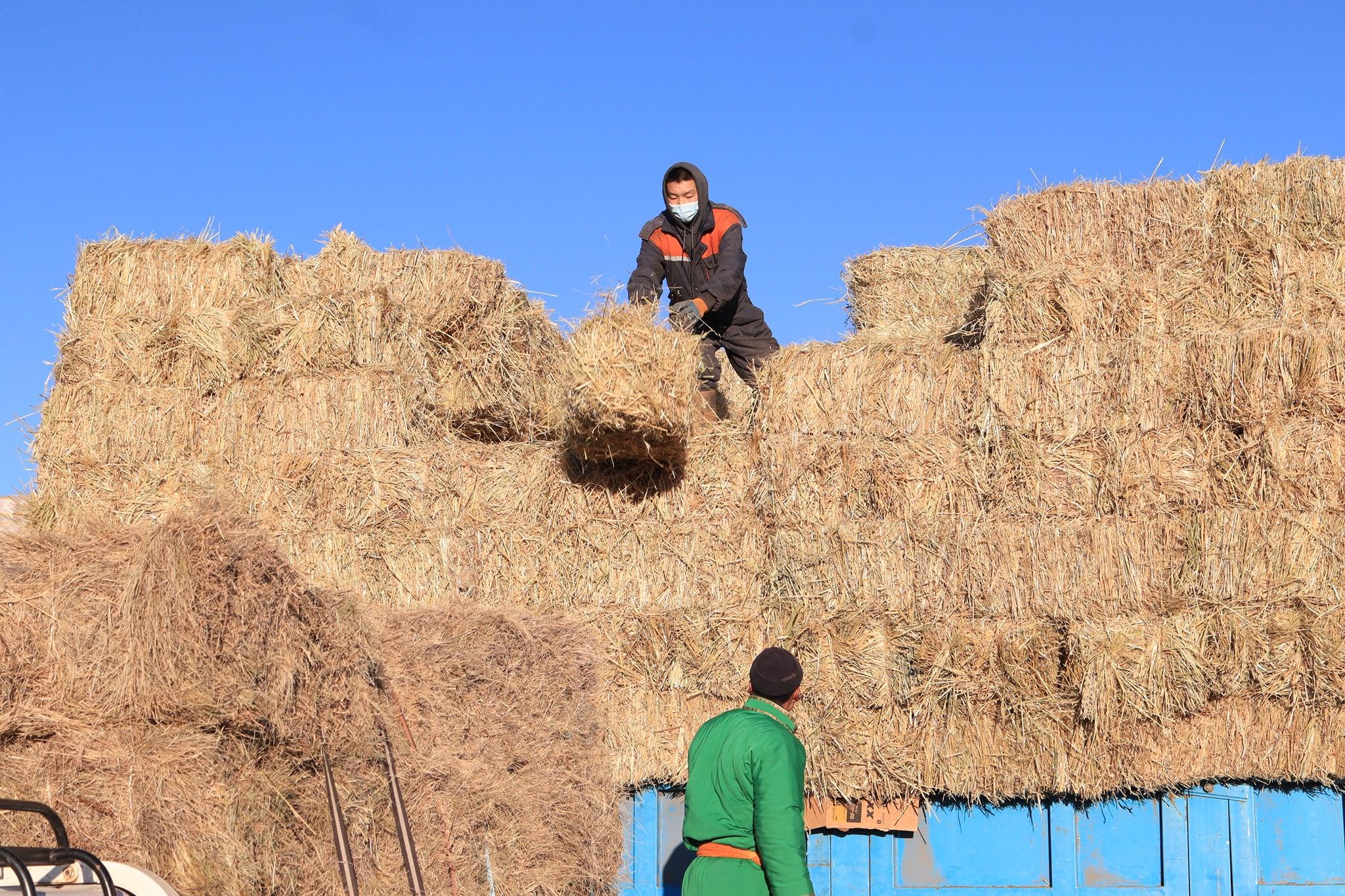 Малчдад хөнгөлөлттэй үнээр өвс, ногоон тэжээл нийлүүлэх ажил аймгийн хэмжээнд өрнөж байна