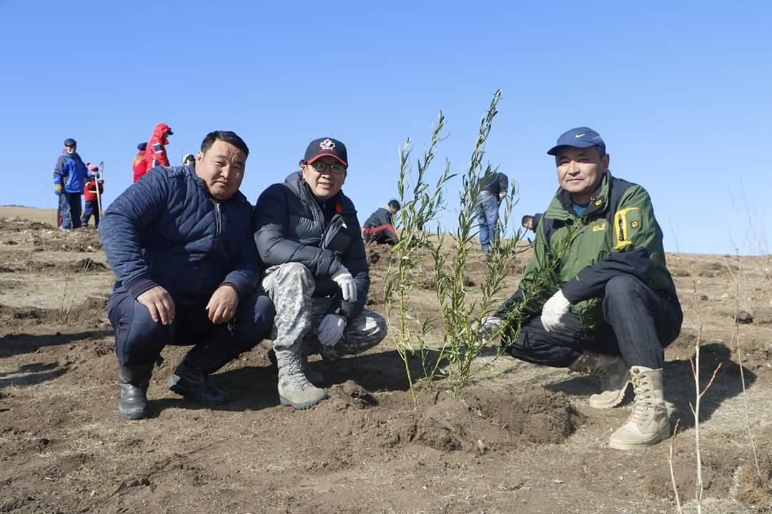 Эрдэнэт хотын ногоон төсөлд зориулж 1000 мод шинээр тарилаа
