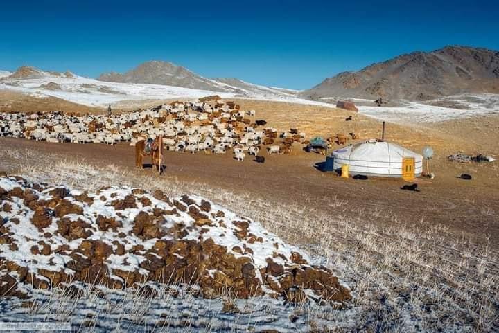 Булган аймгийн Улсын аварга малчид, тариаланчид тодорлоо