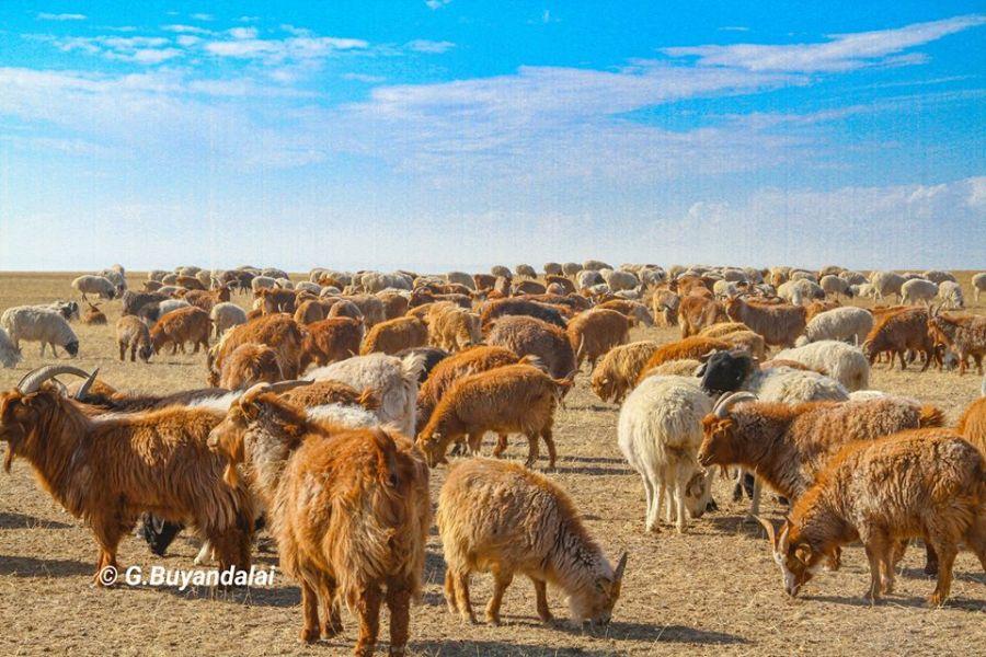 Мал сүргийн хаваржилт, хаврын тариалалтын бэлтгэл ажлын талаар Монгол Улсын Ерөнхий сайдын мэдээллийг сонсож байна